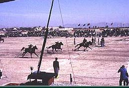 Horse & Cattle Show